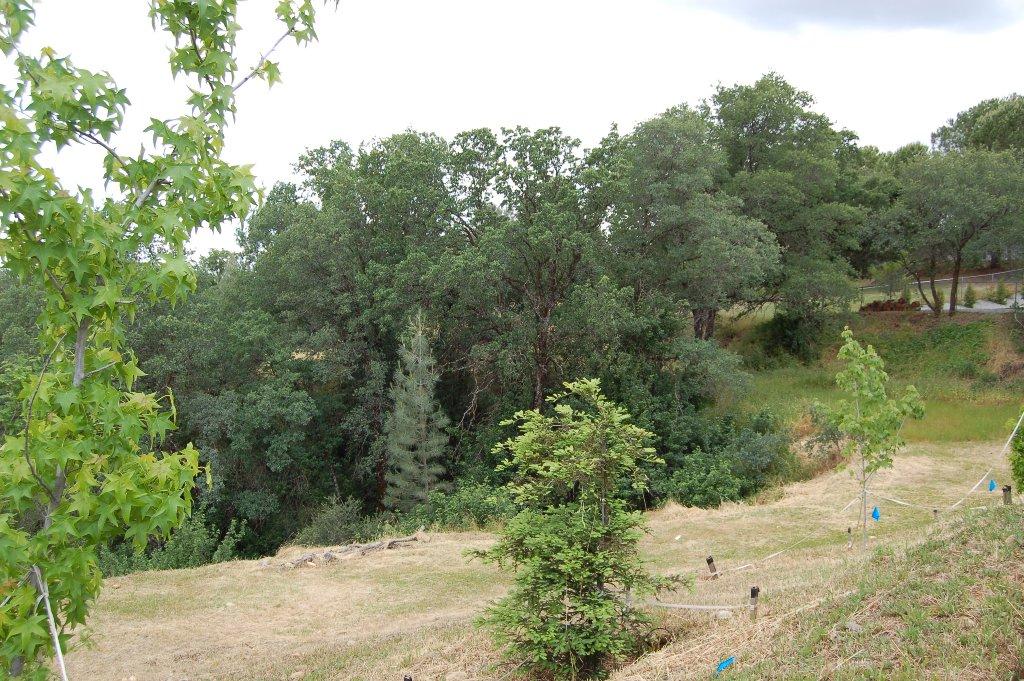 3736 Summit Dr Redding CA Side Yard