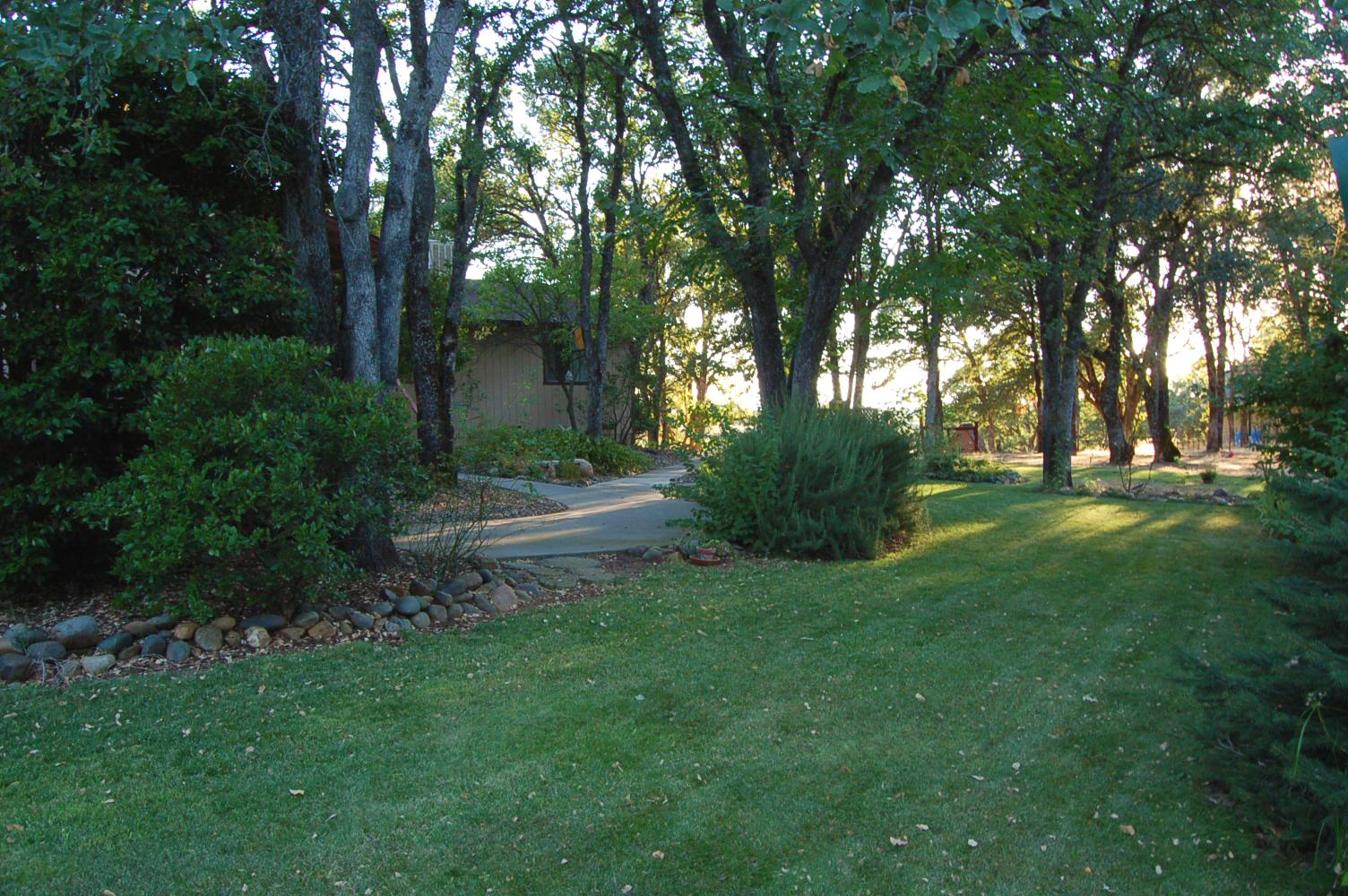 17410-Hooker-Creek-Rd-Cottonwood-CA-grass