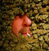 About Redding420.com Marijuana indoor, outdoor, Redding 420 Redding420