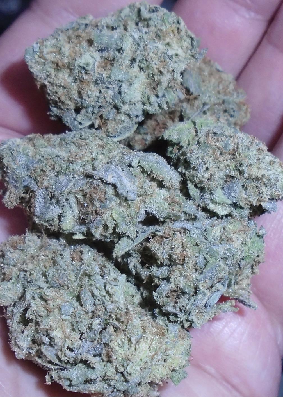 NF1 Top Shelf Indoor Cannabis