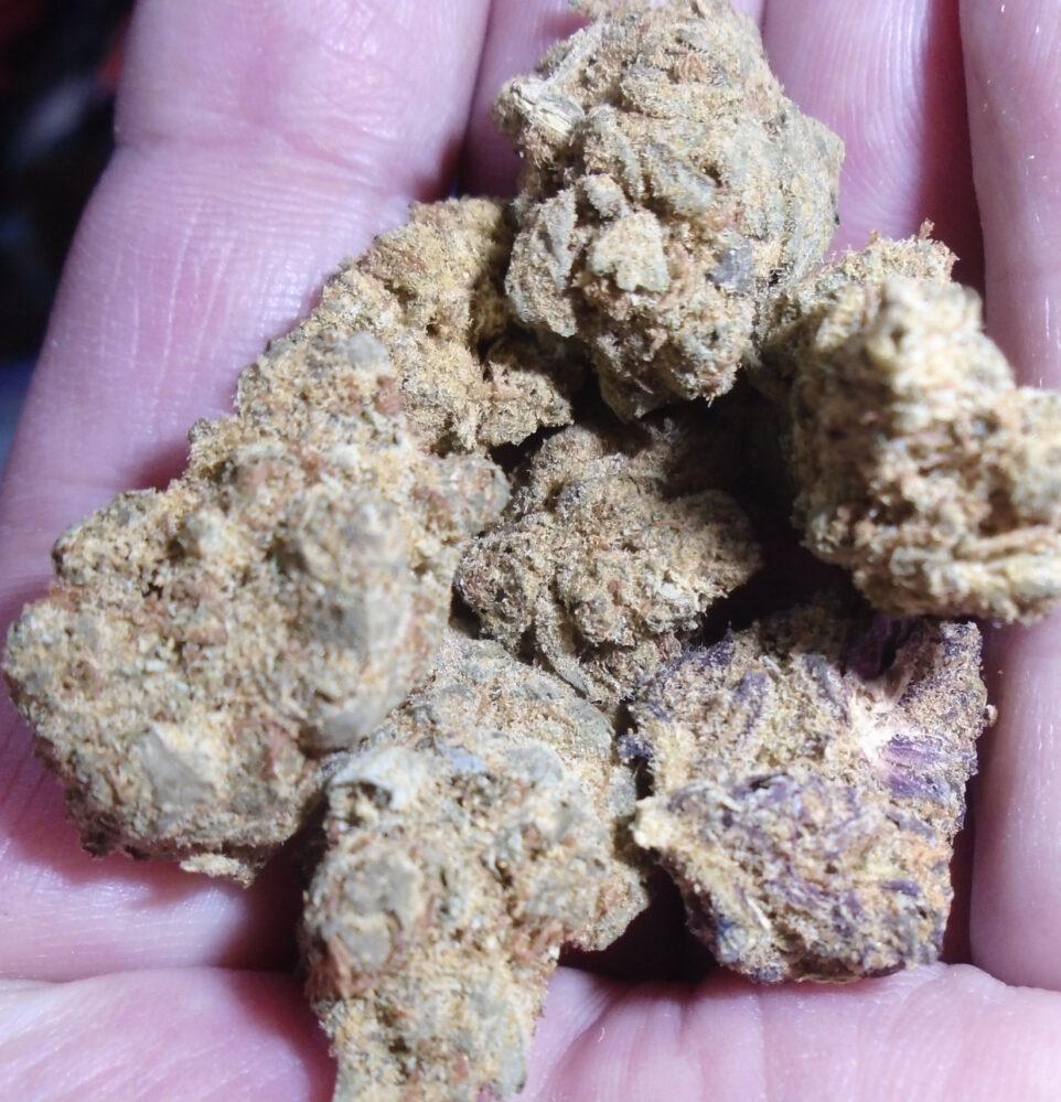Purle Haze Indoor Cannabis